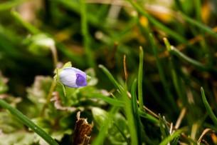 Frühlings Erwachen #3